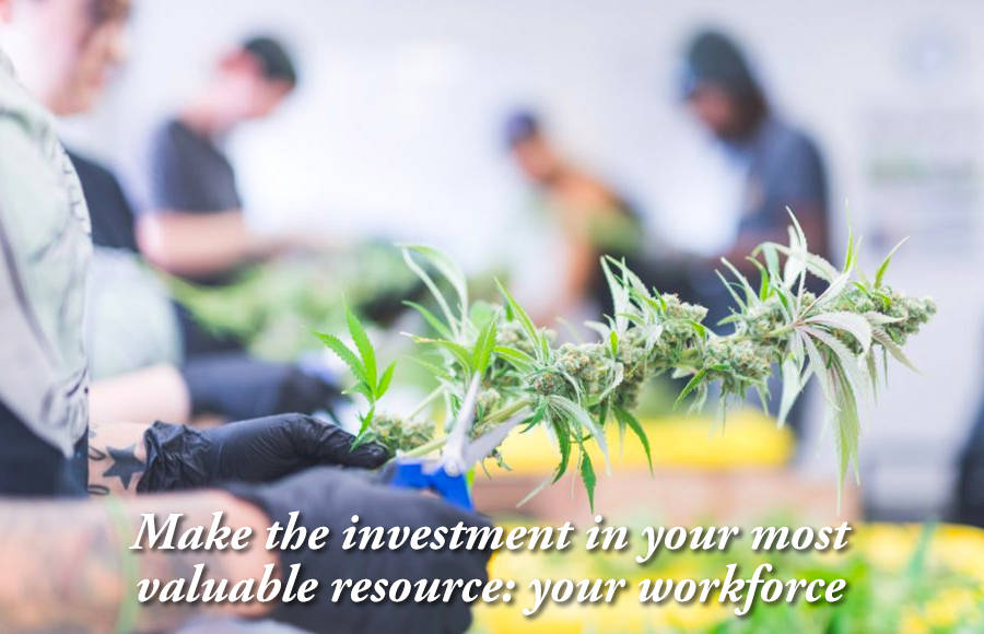 Image of people tending marijuana plants
